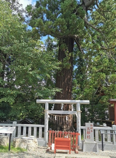 御神木「三郎杉」の画像