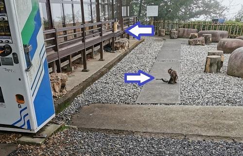 猫2匹がまったりしている様子