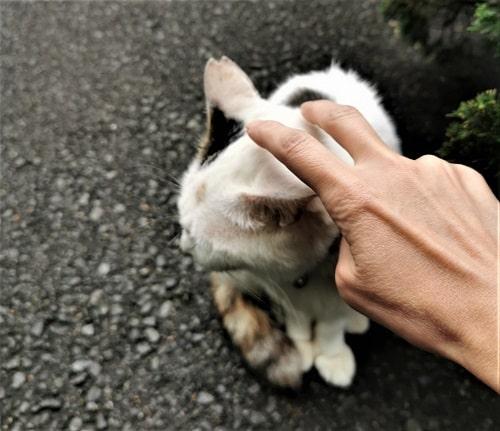 猫をナデナデしている様子