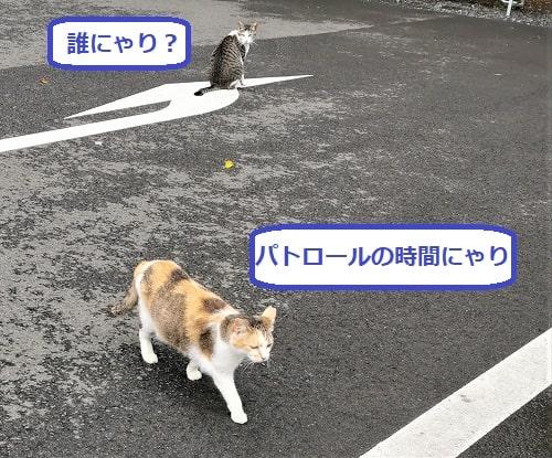 駐車場で出会った2匹の猫の様子