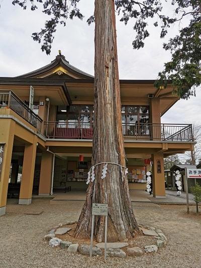 御神木の檜の木の風景