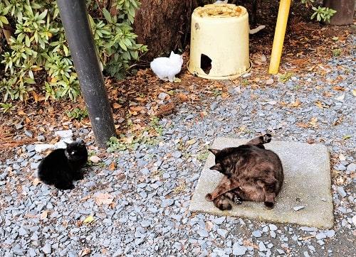 猫達がちょっとくつろいている風景