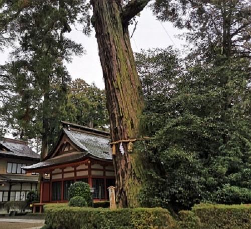 香取神宮の境内にある御神木の風景