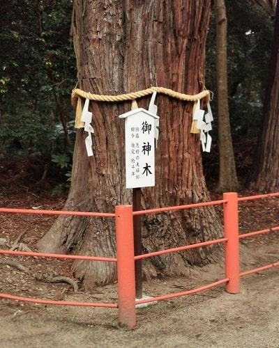 息栖神社の御神木風景