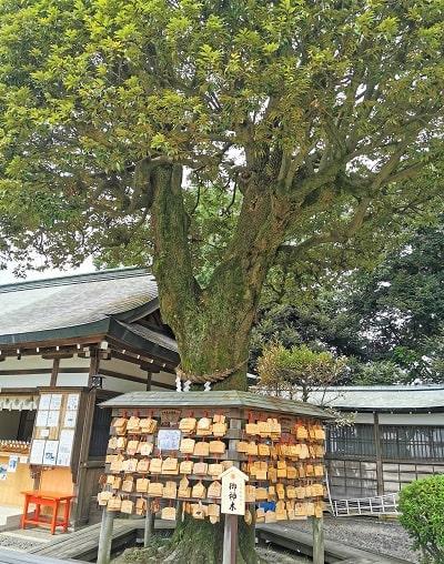足利織姫神社御神木の風景