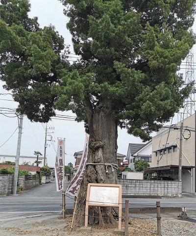 駐車場入り口にある大きな御神木の風景