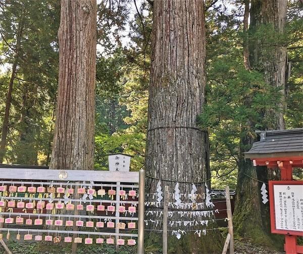 3本の御神木風景