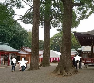 大宮氷川神社舞殿横の大きな木