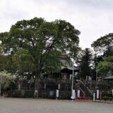藤岡市「諏訪神社」人気の御朱印!古墳の上に社殿!境内の見どころ