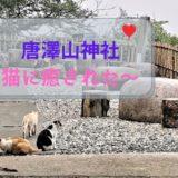境内の猫が集まっている風景