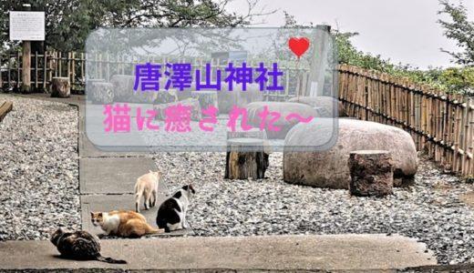 猫好きにはたまらない猫神社?「唐澤山神社」境内の猫達の様子