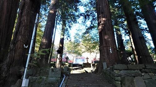 大きな杉の木がたくさんそびえ立つ風景
