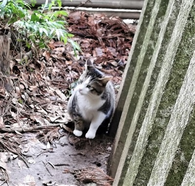 要石の近くにいた猫の画像