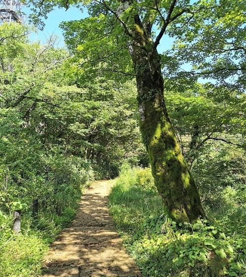 自然の中の坂道の様子