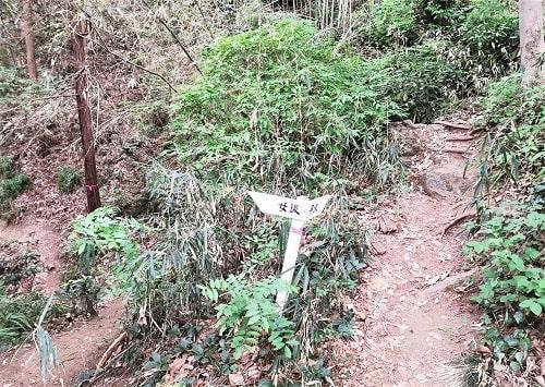 二股に分かれる山道風景