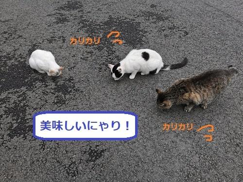 ご飯を食べている猫の様子