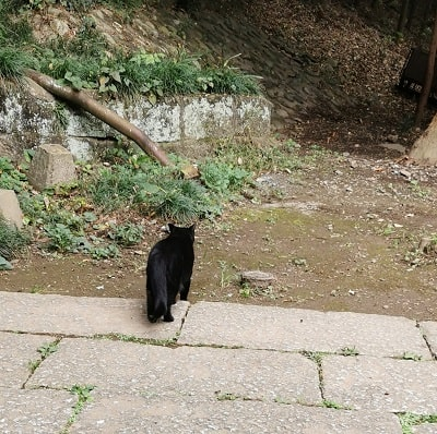 黒猫ちゃんがパトロールに向かう画像
