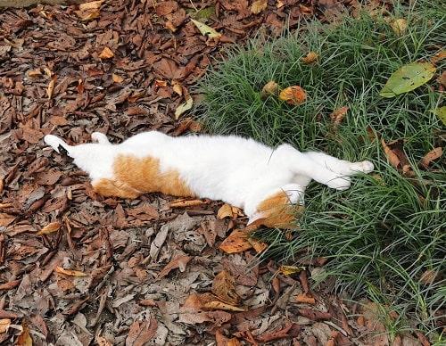伸びて熟睡している猫の画像