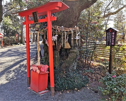 縁結びの桜と鳥居の風景