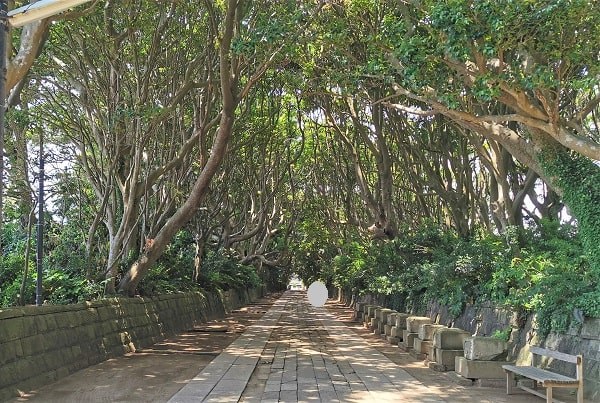 木々に覆われた参道の風景