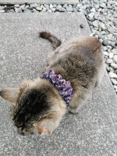 モフモフの猫ちゃんの様子