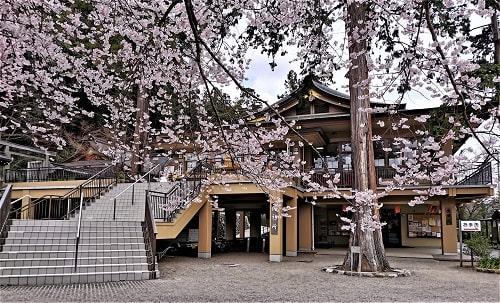 御神木の桜の先に見える参集殿の風景