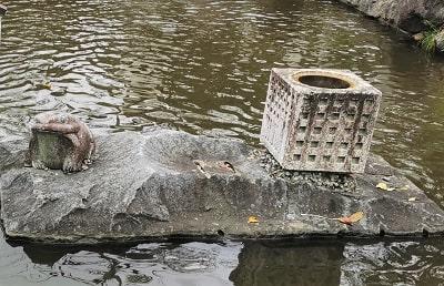 池にあるカエルと不思議な石碑の風景