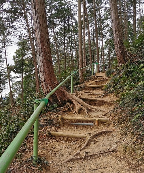 水天宮に向かう木ね根が張り出している階段の風景