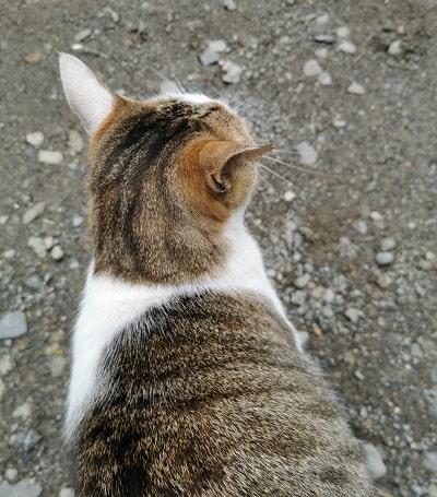 駐車場にいた猫の後ろ姿の画像