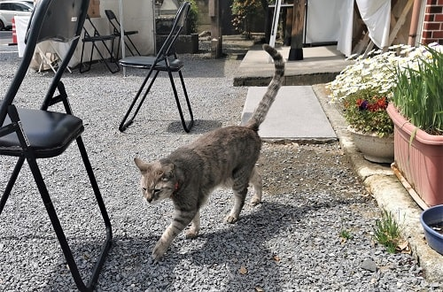 しっぽの長い猫ちゃんの画像