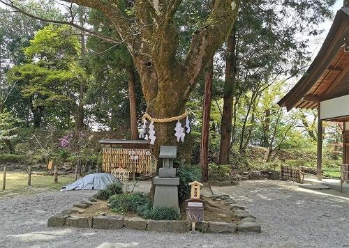 榎天神社と御神木の風景