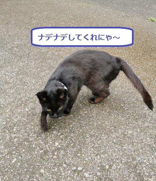 こちらに来る黒猫の様子