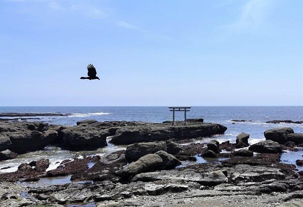 神磯の鳥居の前を鳥が飛んでいる風景