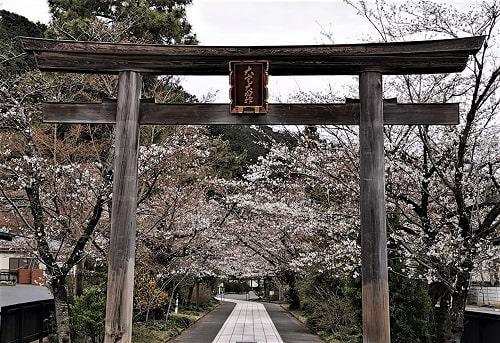 一の鳥居の先に桜並木が見える風景