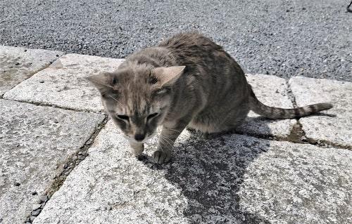 近寄って来る猫の様子