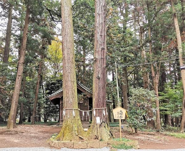 2本並ぶ夫婦杉の風景