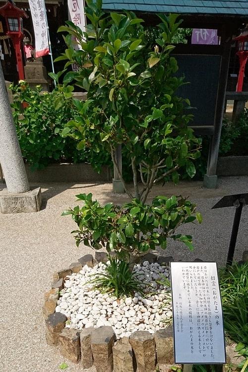 1円玉硬貨に記されている招霊(おがたま)の木