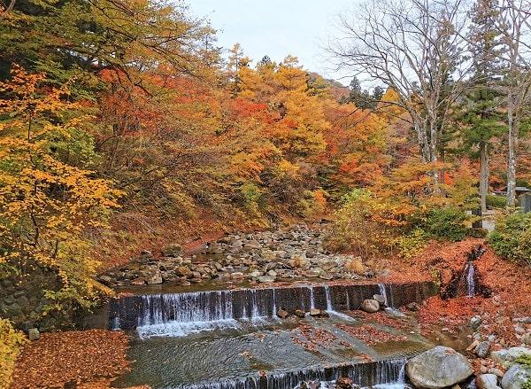 橋の上から撮影した川と紅葉の風景