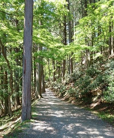 縁結びの木に向かう林道の風景