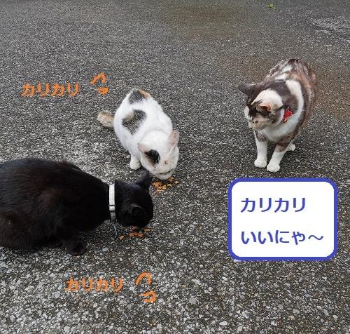 ご飯を食べている猫を後から来た猫が見ている画像