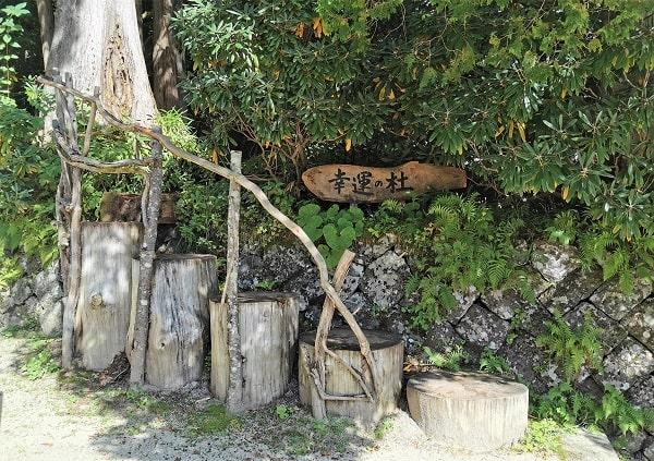 木の幹で作られた階段が入り口になっている風景