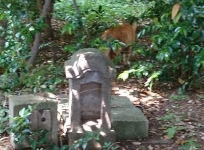 境内で出会った猫の後ろ姿