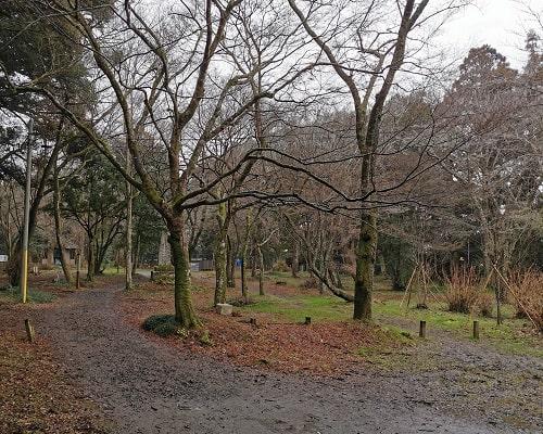 桜の木がたくさん植えられている桜馬場の風景