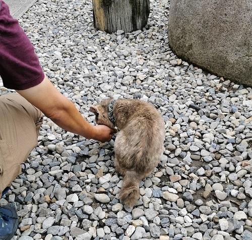 手からご飯を食べる猫の可愛い後ろ姿