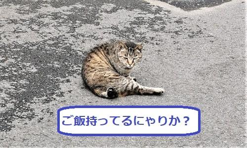 振り向いてこちらの様子をみている猫の画像