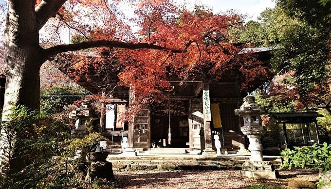 紅葉の木々に囲まれた岩之上堂の観音堂正面の風景
