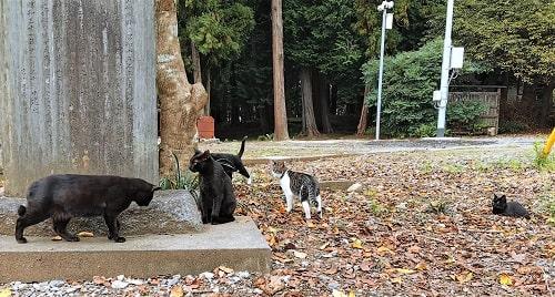 近寄ってみた猫ちゃん達の様子