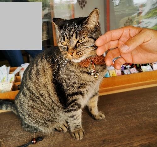 ほほをナデナデされている猫の画像