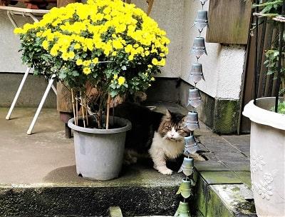 モフモフな猫ちゃんの画像