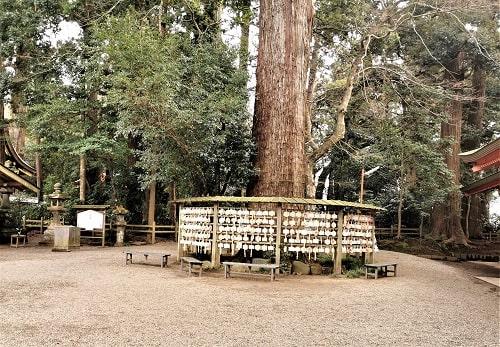 境内で二番目に大きい杉の木の風景